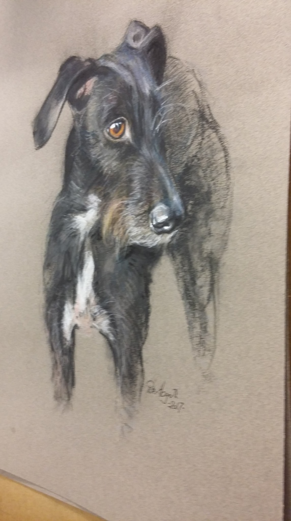 Lurcher in Pastel by Peter Hogarth - work in progress!